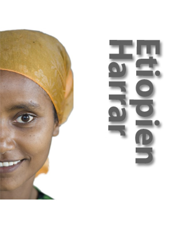 Etiopien Yirgacheffe Aramo gr. 1, soltørret rå bønner-37