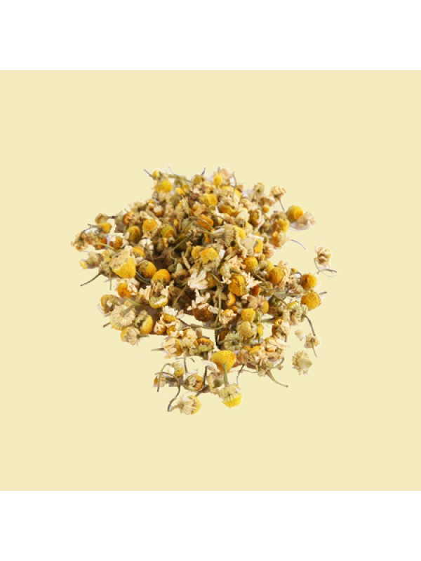 Kamille blomst