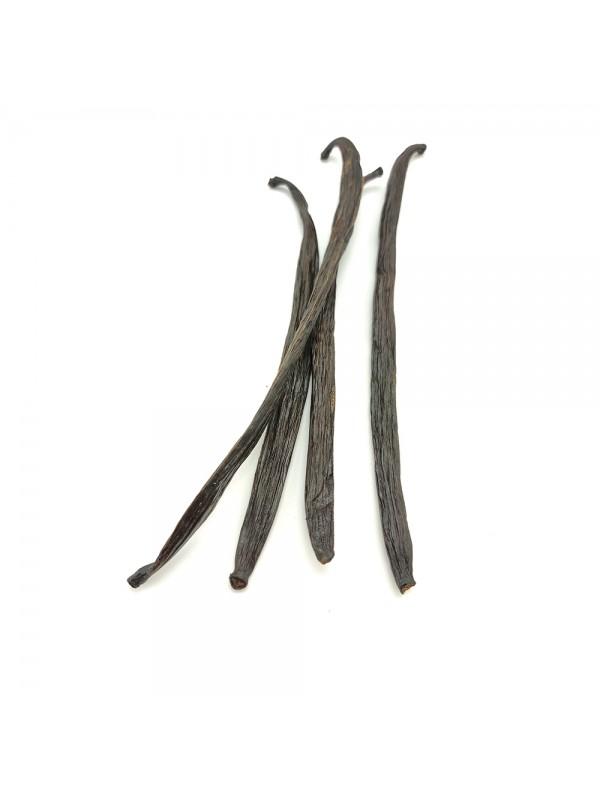 Vaniljestang Uganda 1-3 gr.-31