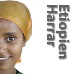 Etiopien Yirgacheffe Aramo gr. 1, soltørret rå bønner-20